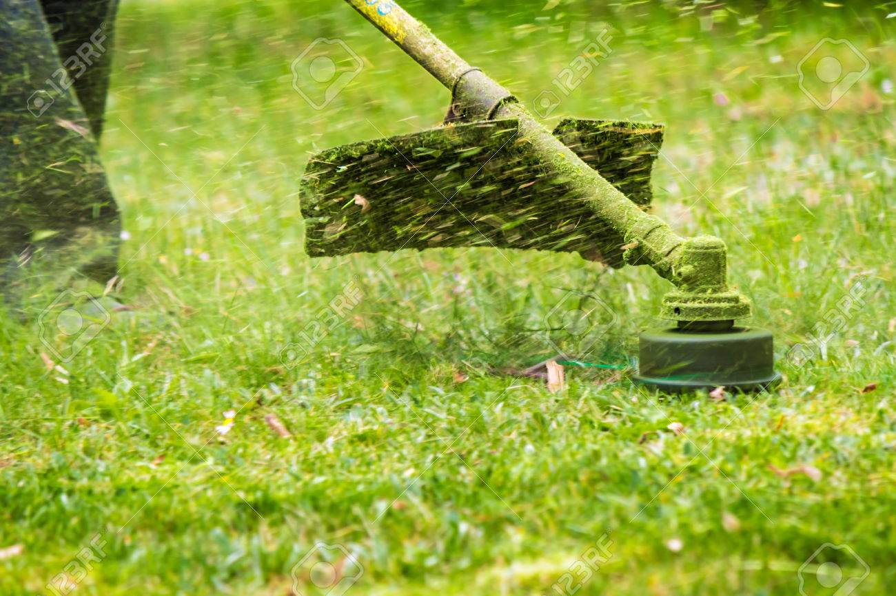 close up shot of gasoline trimmer head with nylon line cutting fresh green grass to small pieces - 39425106