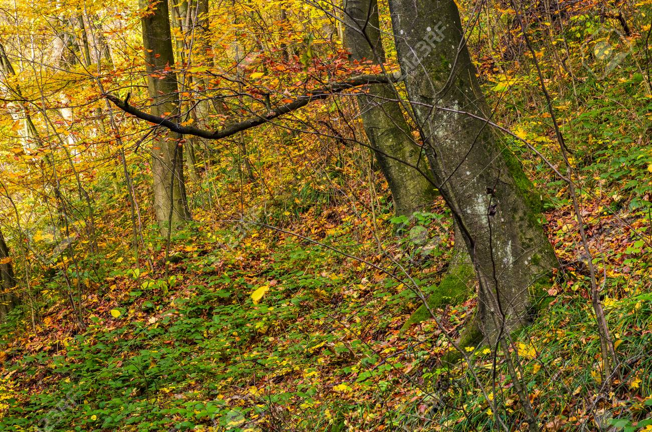 Beautiful Forest Background In Golden Foliage Lovely Autumnal