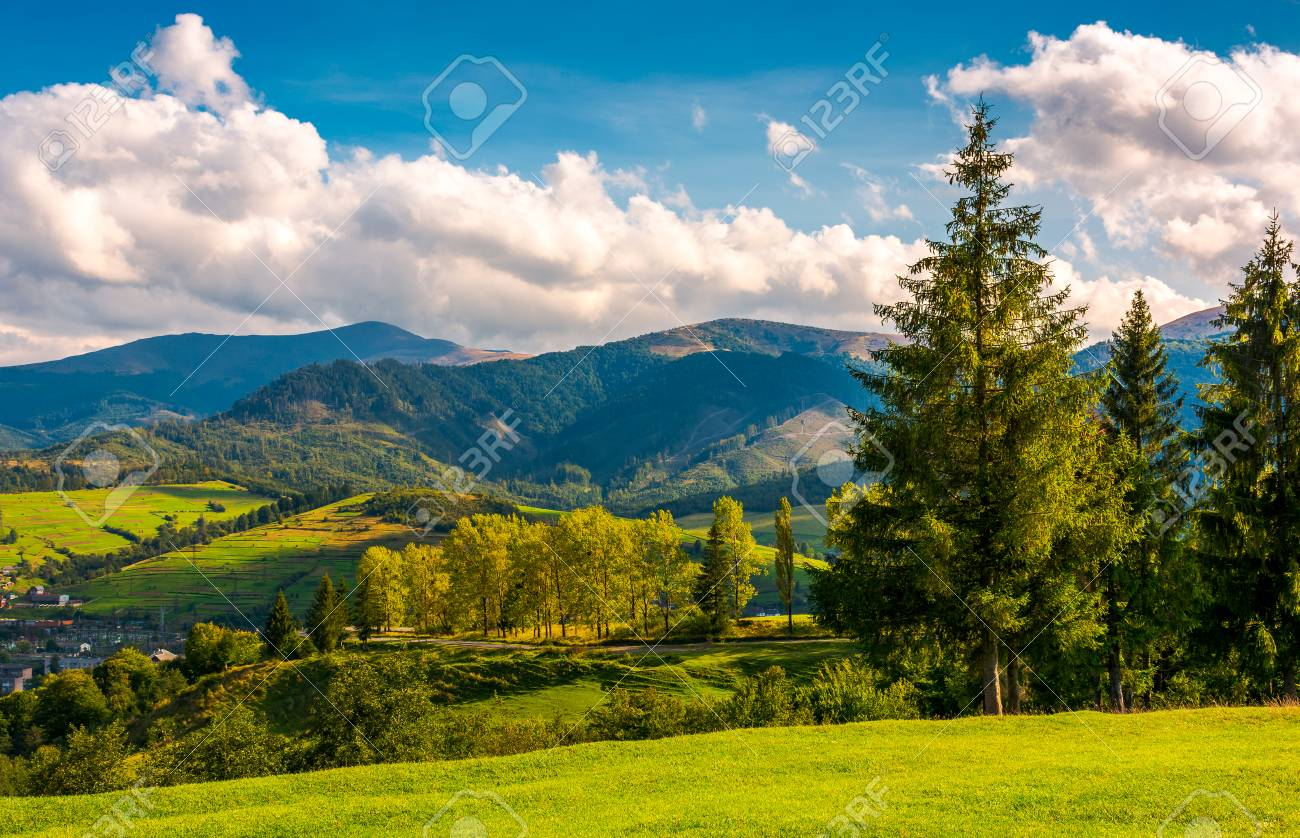 Beautiful Landscape In Mountains Trees On The Grassy Hills Of Stock Photo Picture And Royalty Free Image Image 101904076