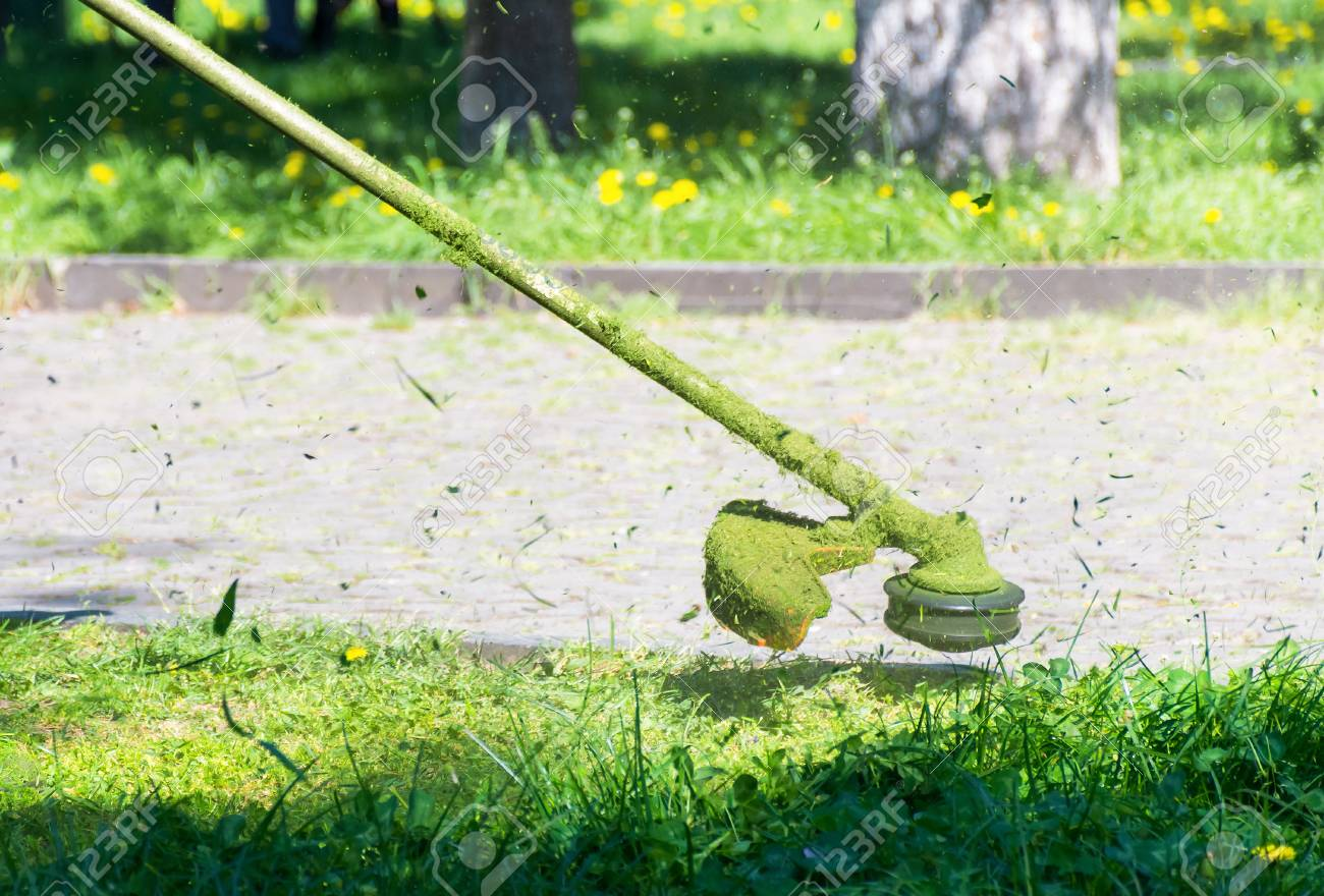 crazy grass cutting in the park with gasoline trimmer. head with nylon line cutting grass and dandelions in to small pieces. flying plant lumps. beautiful gardening background - 115869390