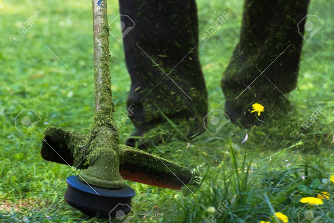 crazy grass cutting in the park with gasoline trimmer. head with nylon line cutting grass and dandelions in to small pieces. flying plant lumps. beautiful gardening background - 115869392