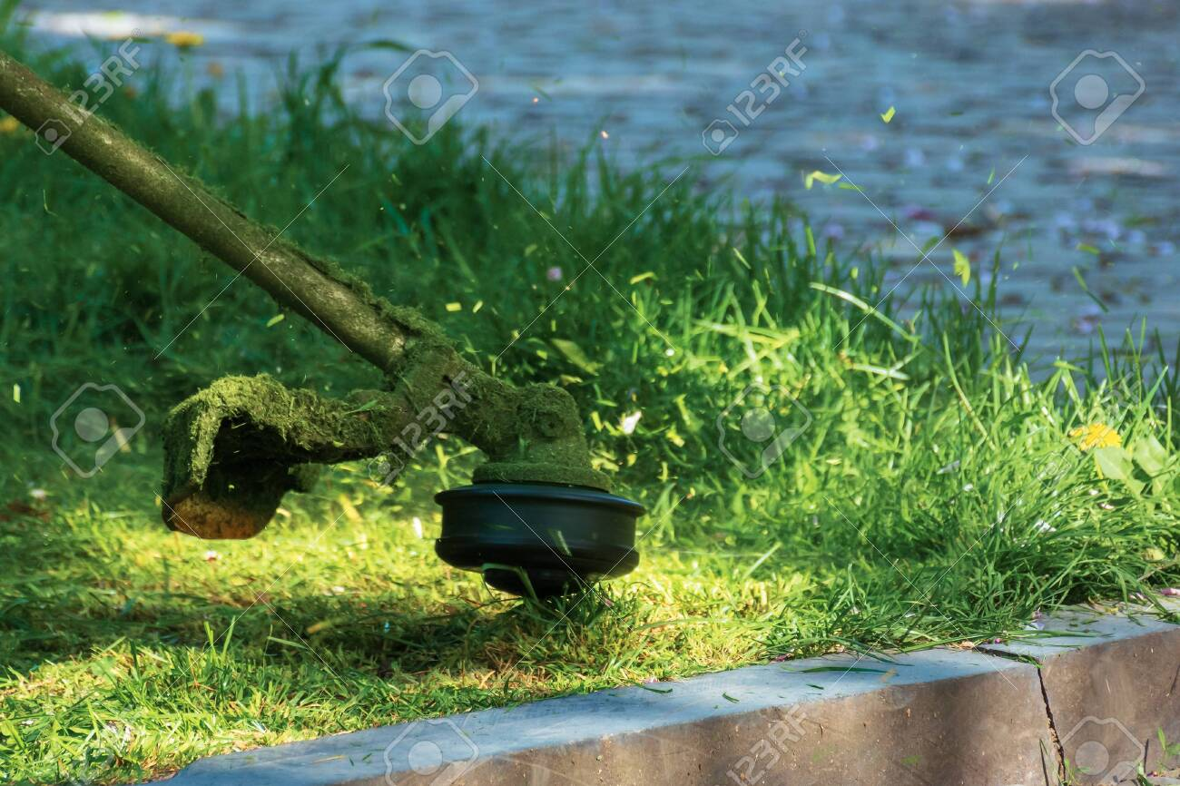 professional grass mowing in the park. green lawn with yellow dandelions. close up shot of gasoline brush cutter head with nylon line trimming fresh green grass to small pieces - 134333759