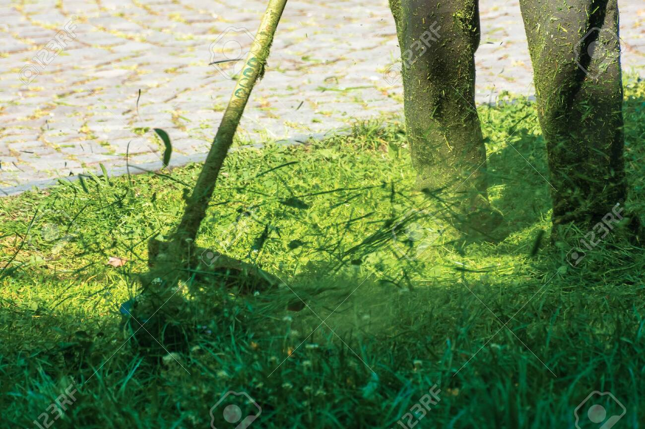 professional grass mowing in the park. green lawn with yellow dandelions. close up shot of gasoline brush cutter trimming fresh grass to small pieces - 134451271