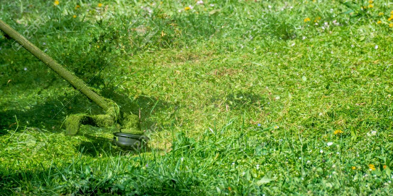 grass care with brush cutter. working with professional grade garden tool in the park. using trimmer line to mow grass on a sunny day in spring. pieces of weeds thrown apart in the air - 137067127