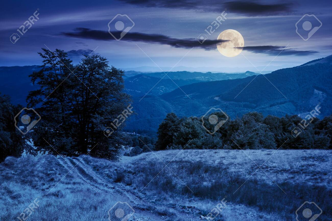 beech forest on the mountain meadow at night. beautiful summer landscape. grass and trees on the hills in full moon light. beauty of transcarpathian nature - 151568222