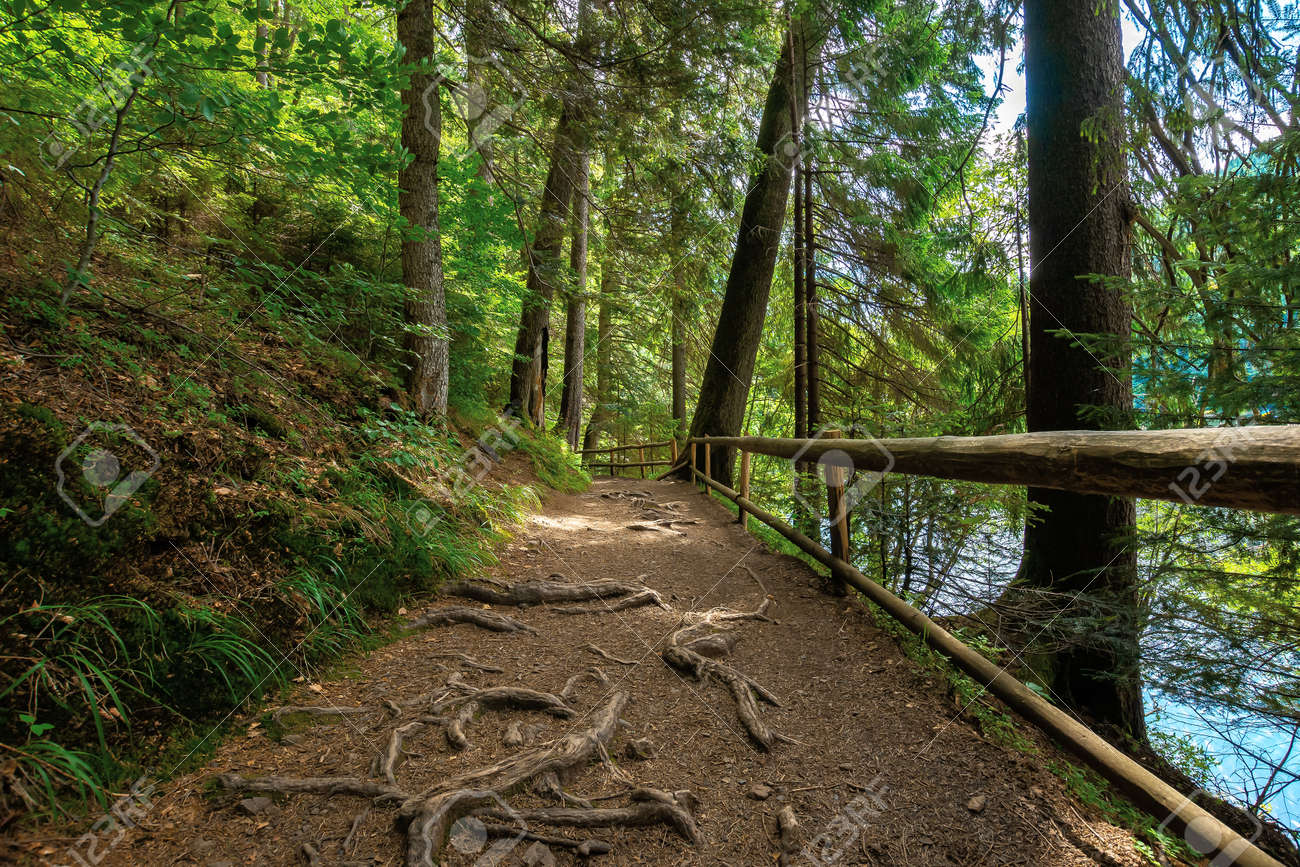 trail through forest in summertime. trees an fence along the path. roots stick from the ground. nature travel concept, explore the wilderness - 165633686