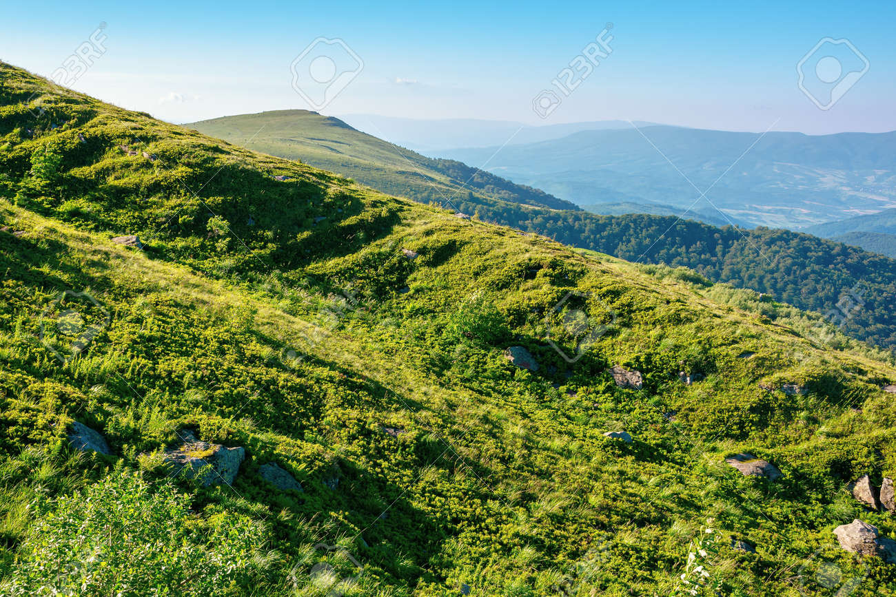 mountain landscape in summer. grassy hills in the morning light. beautiful nature of carpathians - 170481953