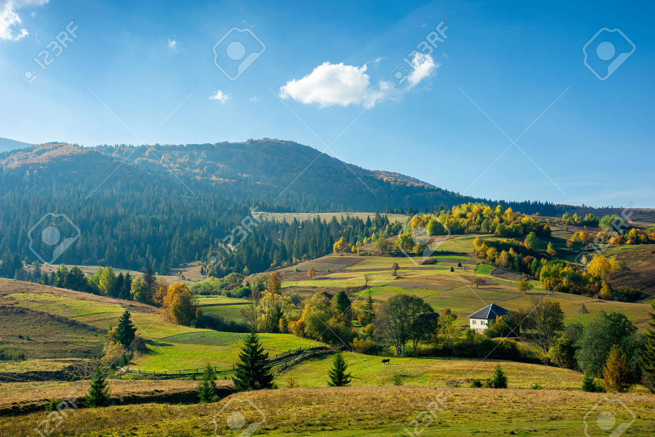 mountainous rural landscape in autumn. fields and trees on hills. carpathian countryside in evening light - 170571969