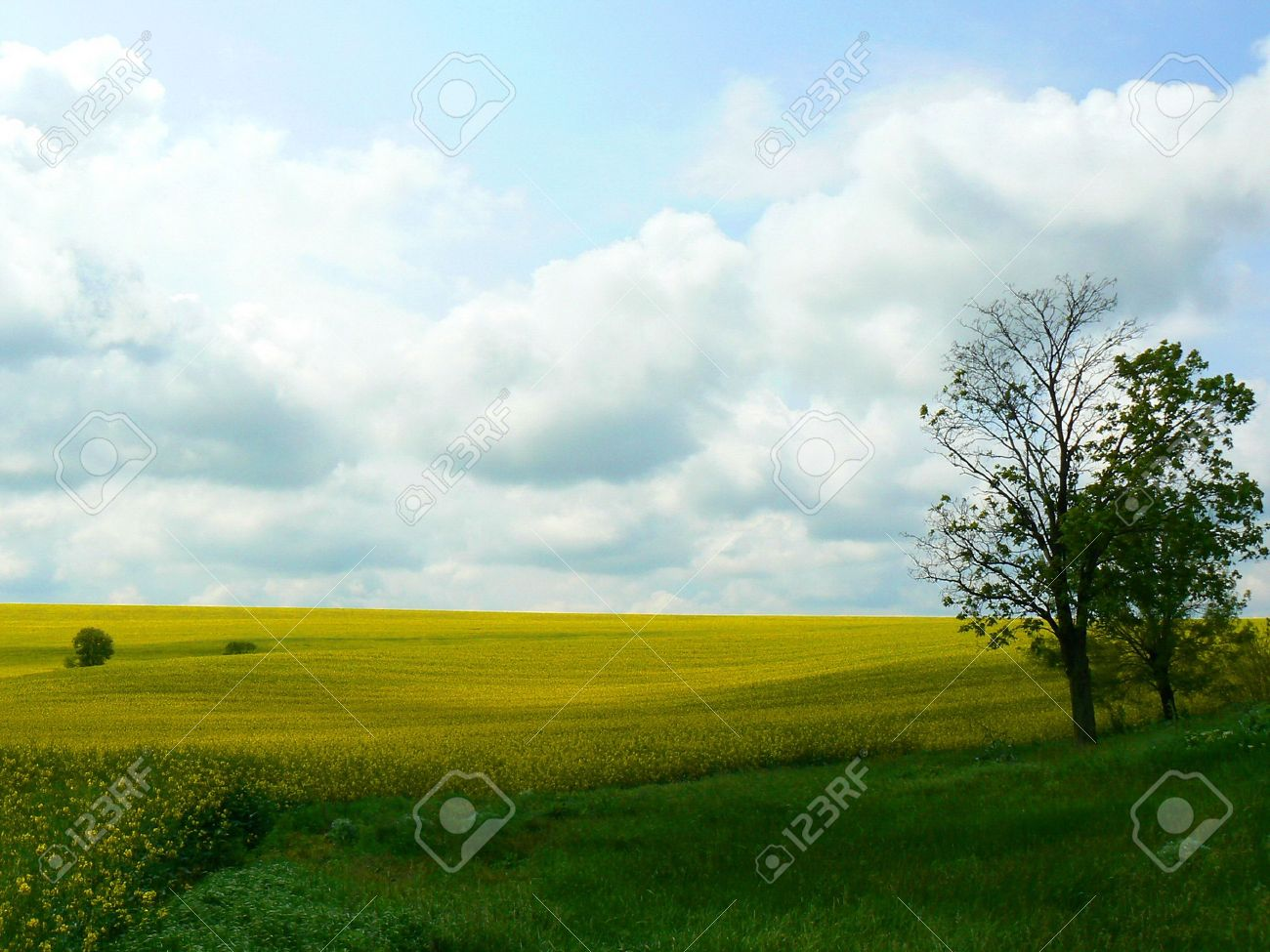 grassy field background. Outdoor Landscape With Green Grassy Field In Foreground And Bright Golden  Yellow Background Against