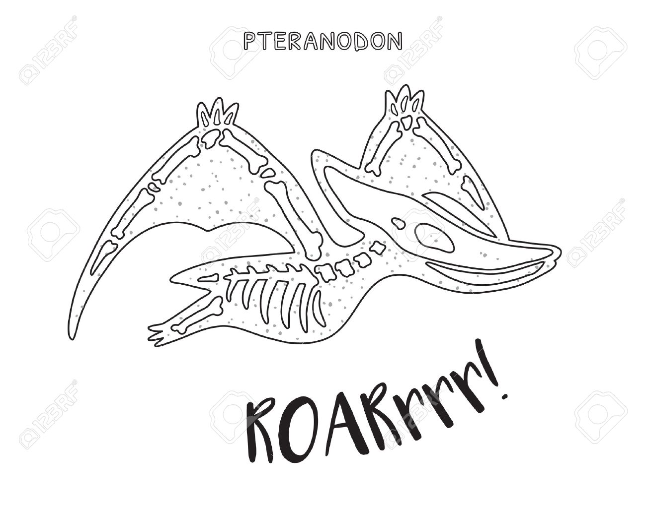 Pteranodon Skeleton Outline Drawing. Fossil Of A Pteranodon Dinosaur ...