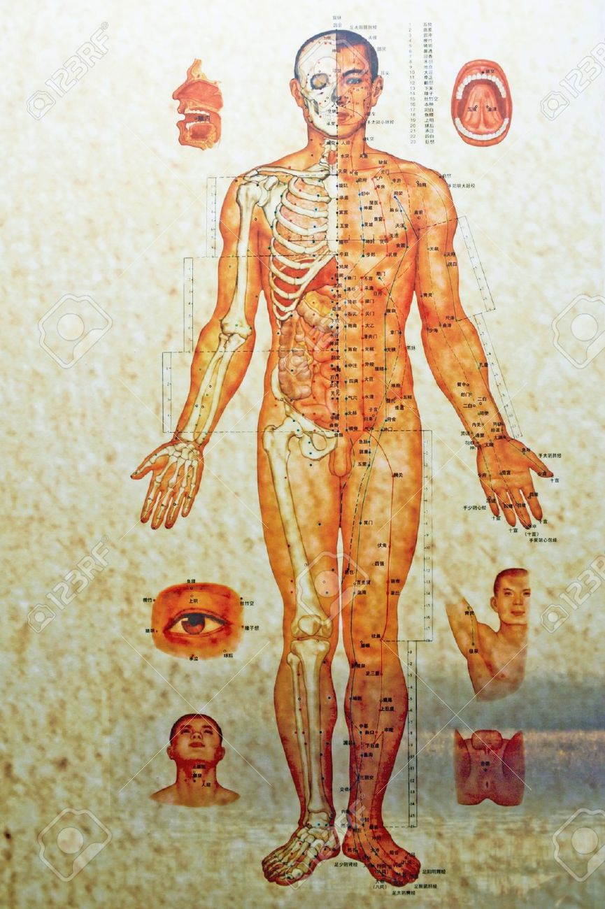 中国、中国医学の人体の構造 ロ...