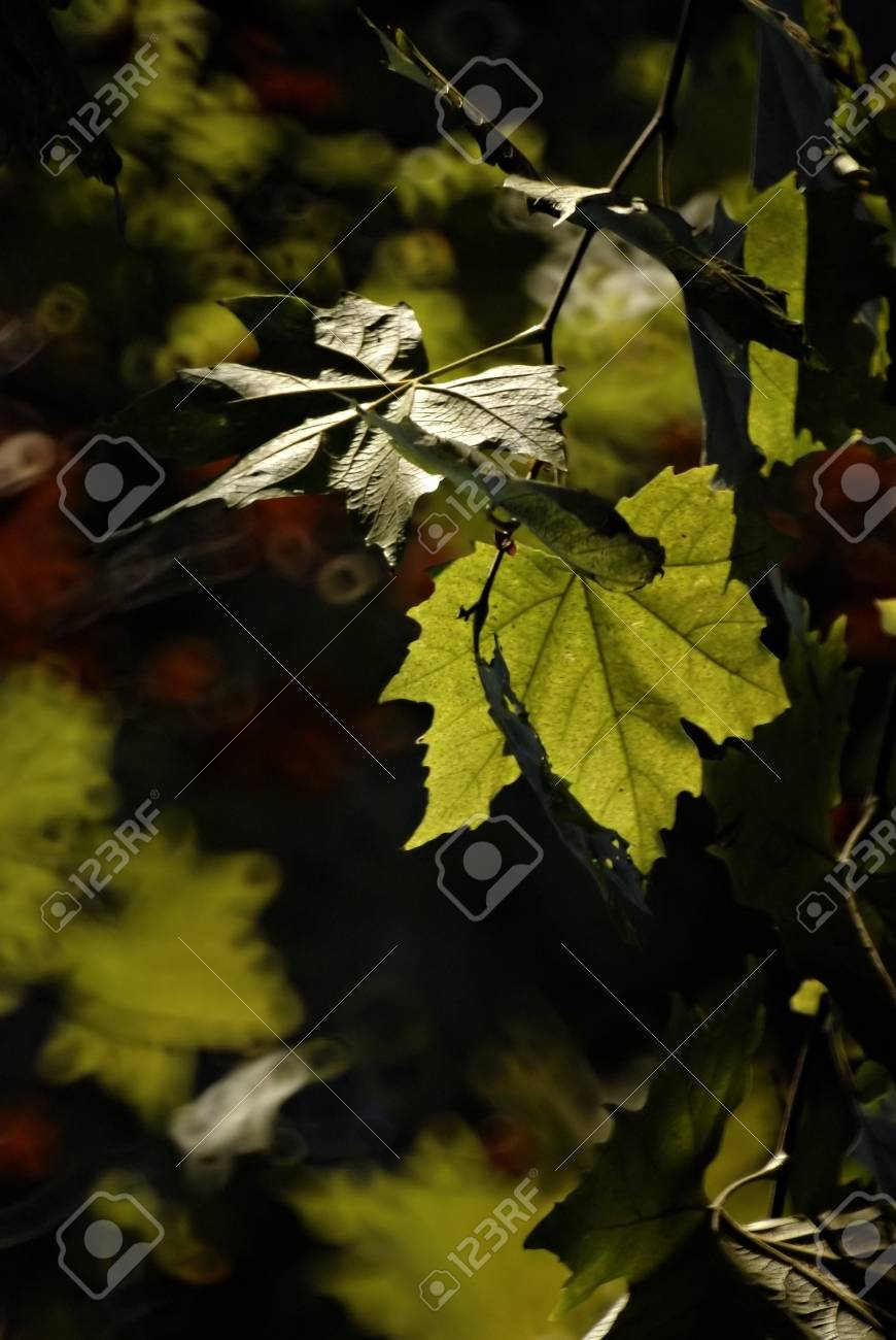 Few green leaves in backlight against dark background. Stock Photo - 9658556