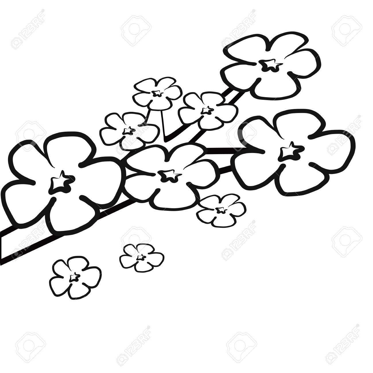 Incolore fleur de fleur de cerisier sur la branche livre de coloriage illustration vecteur isolé sur