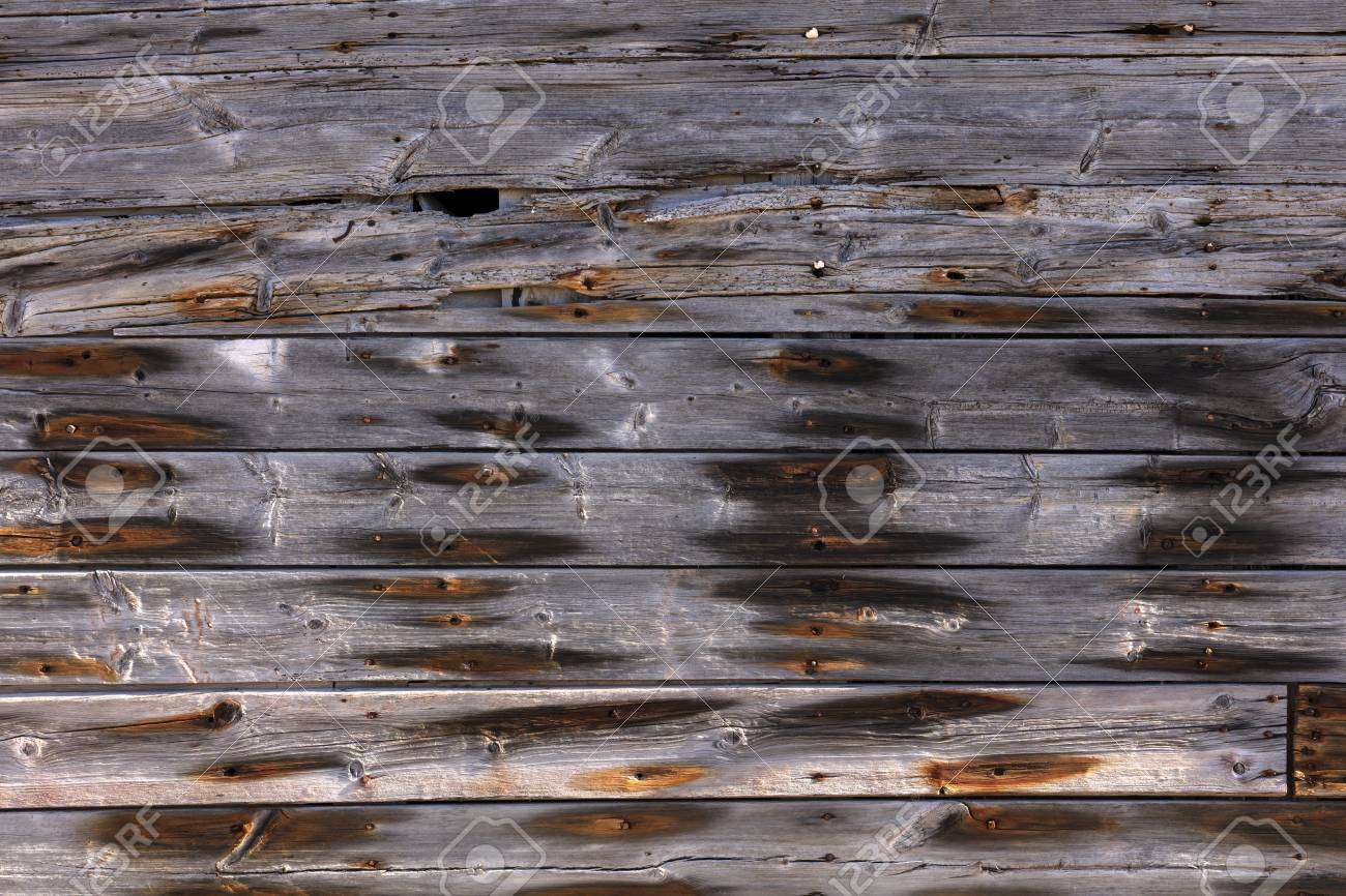 very old exterior wall of an old building made of dry wooden boards of gray color with orange spots of rusty nails - 116921186