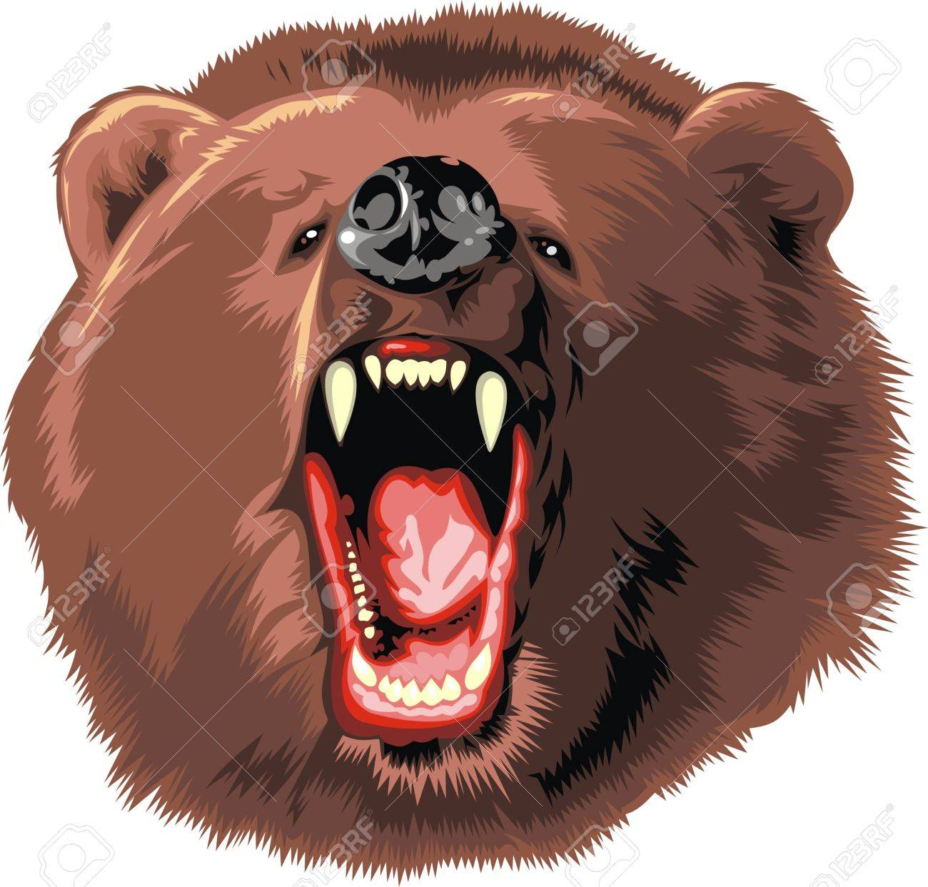 big brown bear isolated on white background Stock Vector - 18315590