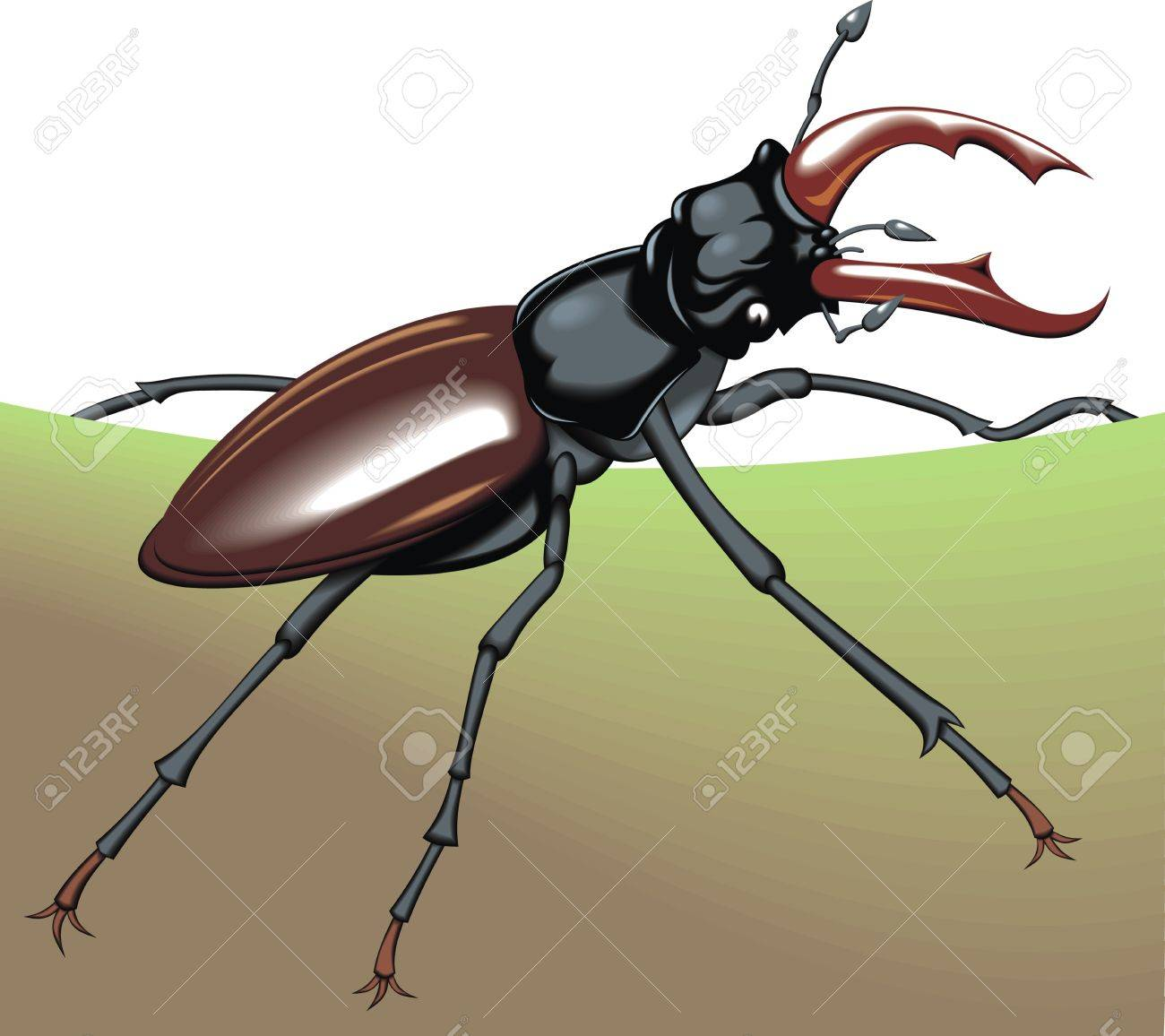 nice big bug on the white background Stock Vector - 19207045