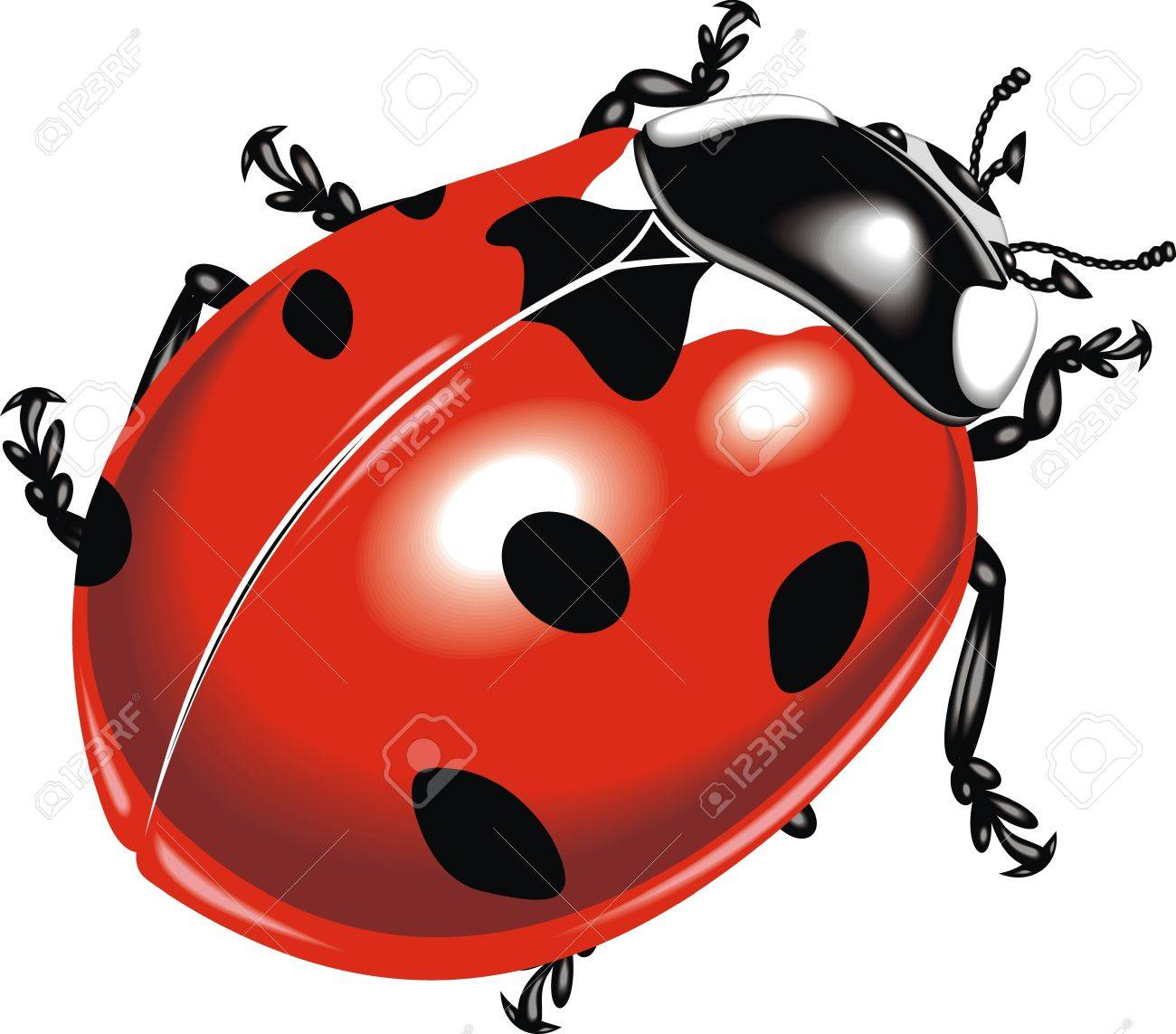 nice red bug on the white background Stock Vector - 19556546