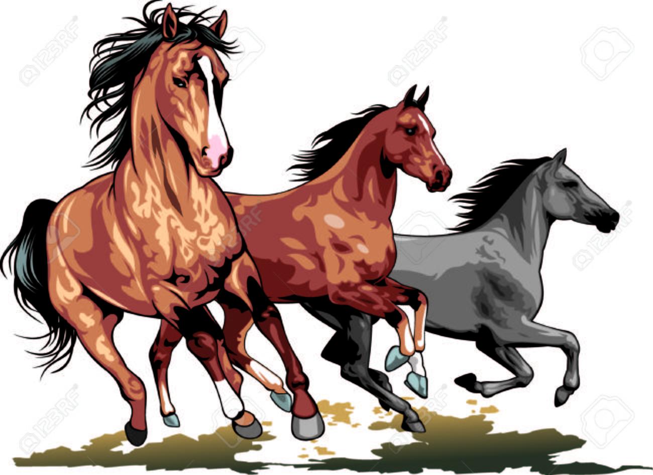 wild horses isolated on the white background - 24285919