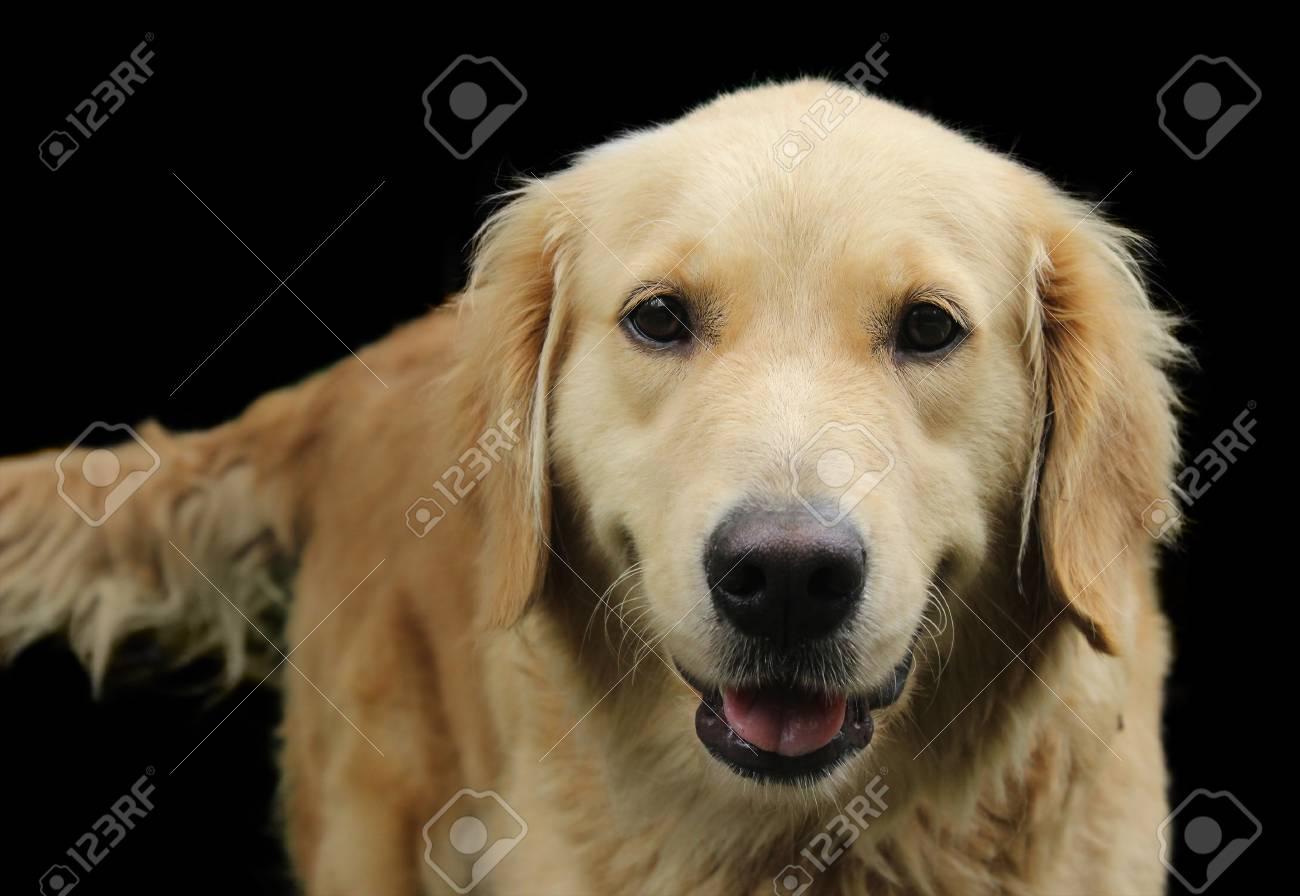 Imagen De Detalle De Un Perro Golden Retriever Feliz Mirando A