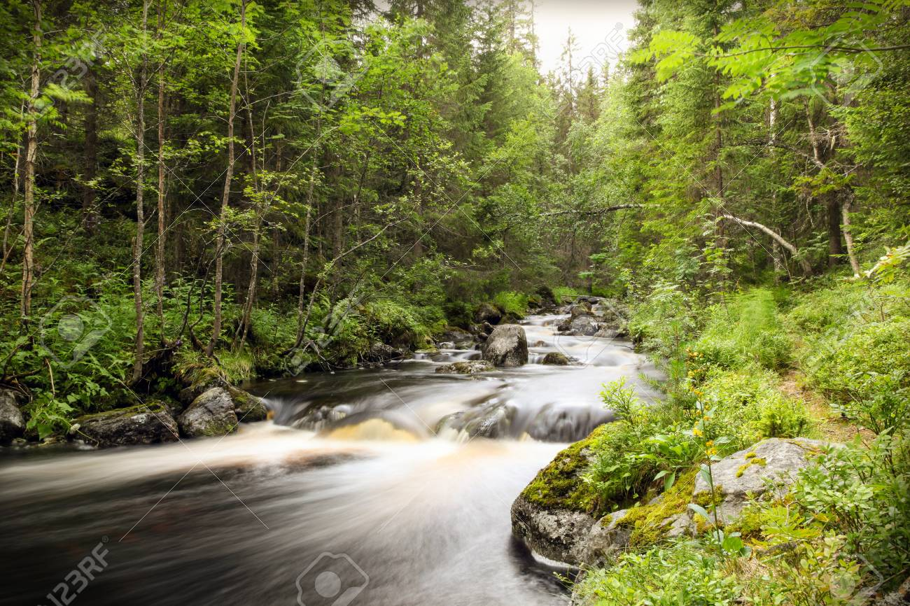 Long exposure of a forest stream with smooth water surroundet by trees and foliage. Stock Photo - 94804769