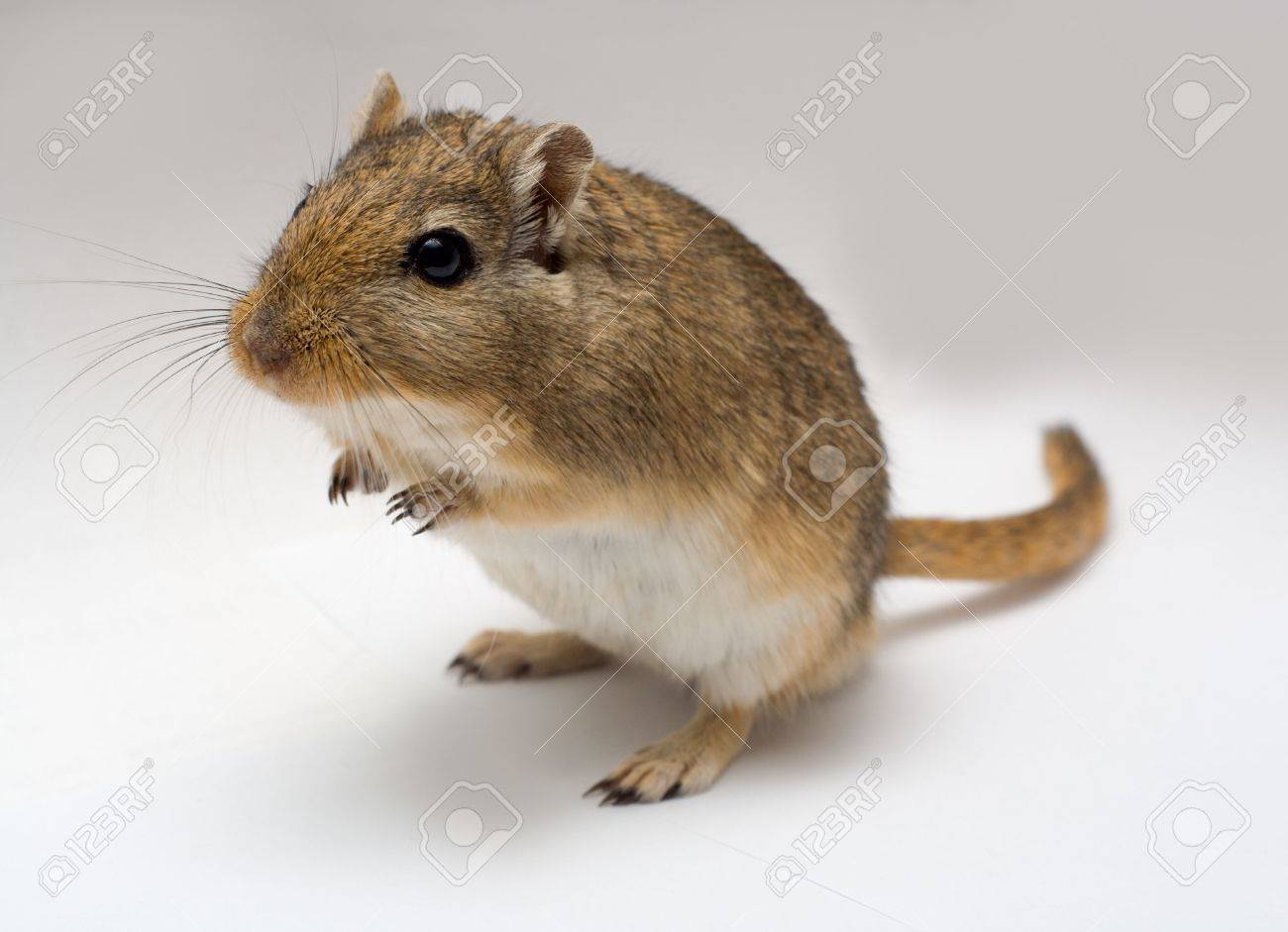 Stock Photo - home pet...