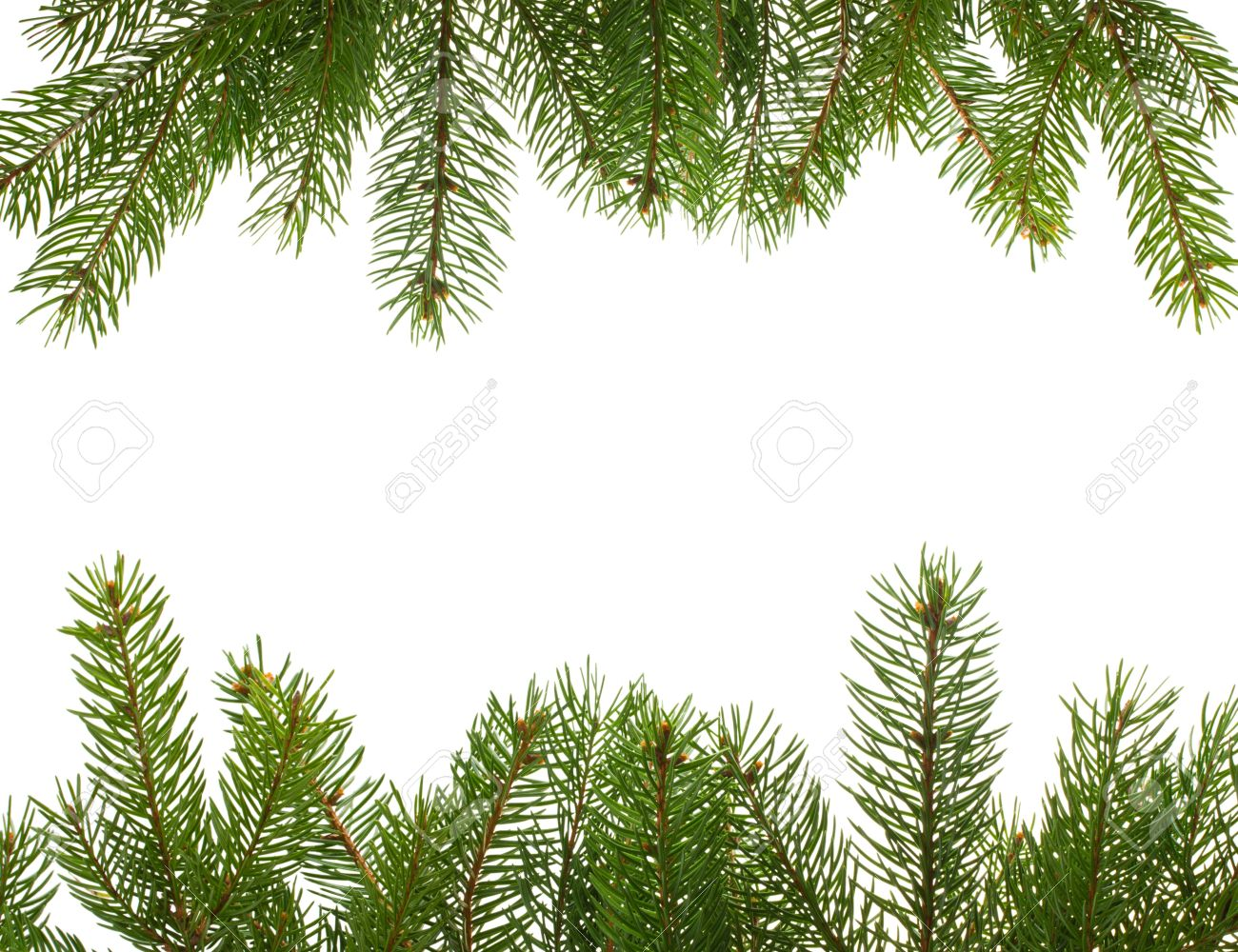 Pine Boughs Images & Stock Pictures. Royalty Free Pine Boughs ...