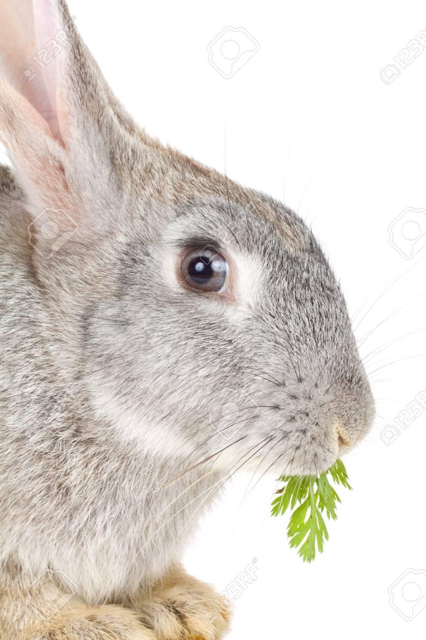 close-up rabbit eating leaf, isolated on white Stock Photo - 9009169