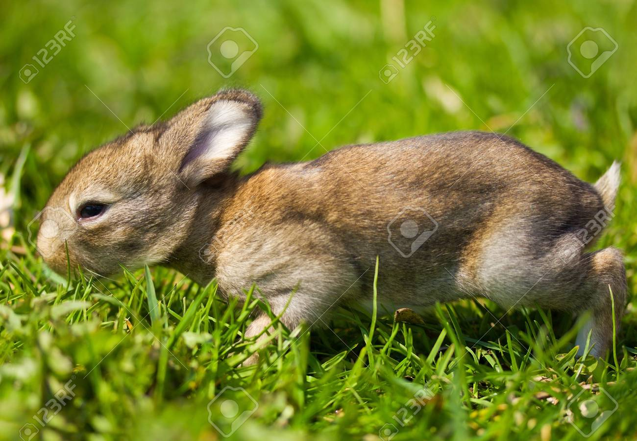 gray bunny on green grass background Stock Photo - 12407584