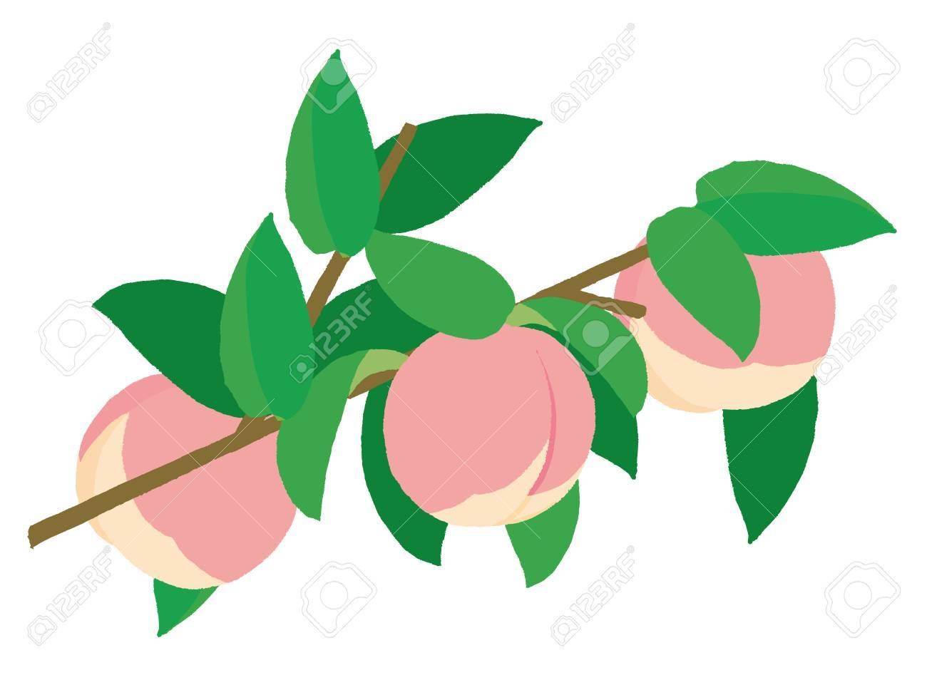 Peach Tree Branch Clipart Royalty Free Cliparts Vectors And Stock