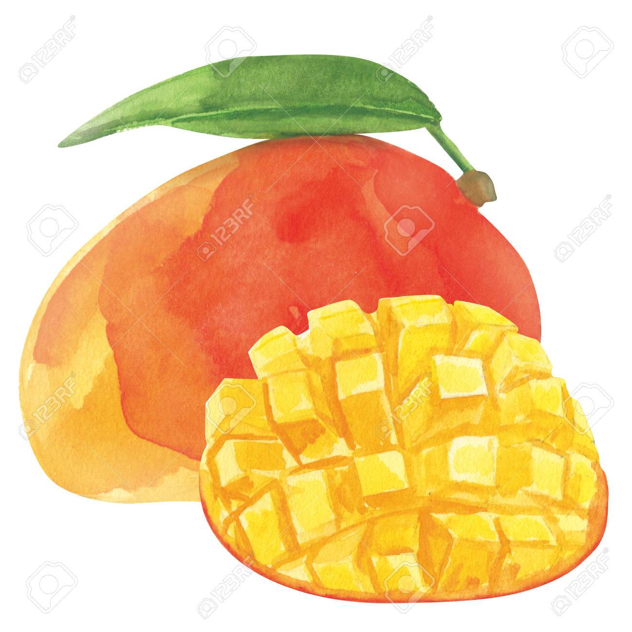 Watercolor fresh ripe mango fruit, closeup isolated on white background. Hand painting on paper - 80243781