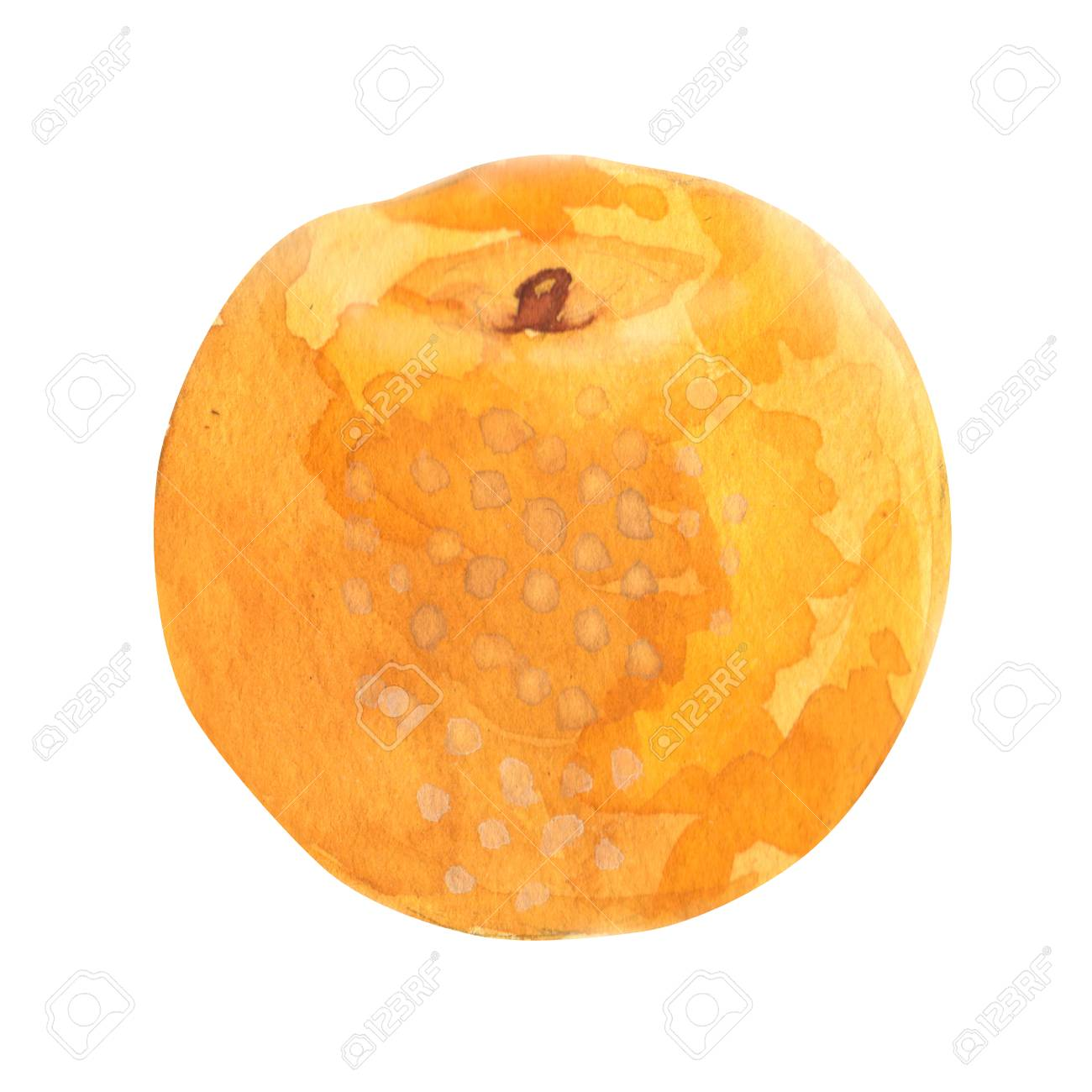 PEAR. watercolor painting on white background - 80243785