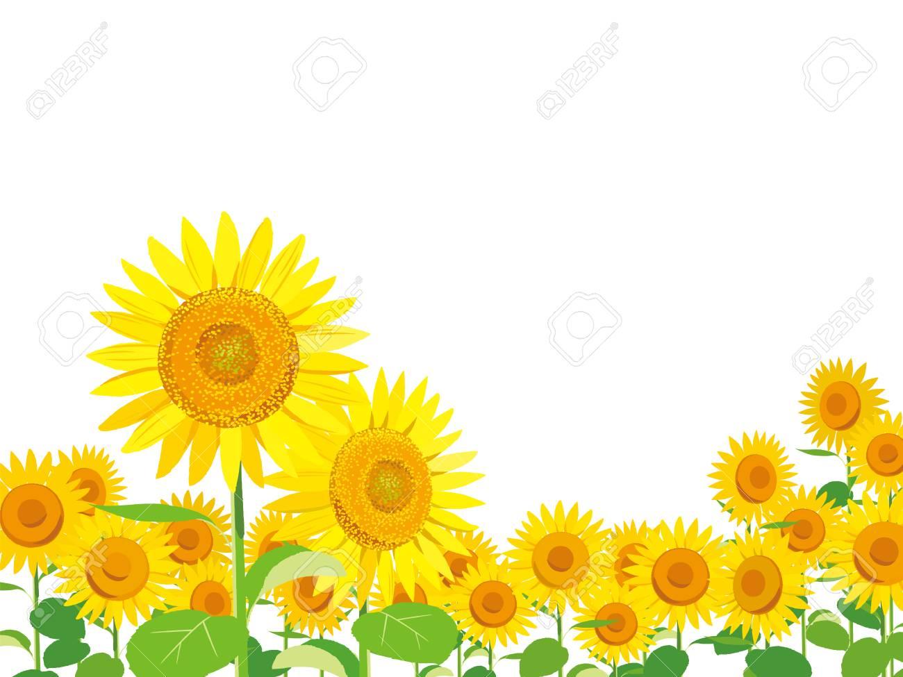 ベクトル イラスト 壁紙と背景ひまわりの庭と空を景色します のイラスト素材 ベクタ Image 8044