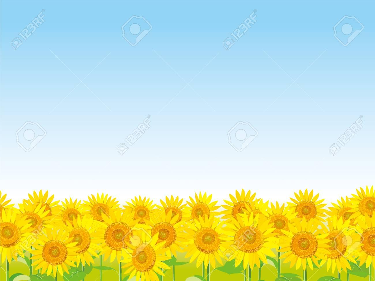 ベクトル イラスト 壁紙と背景ひまわりの庭と空を景色します 夏挨拶を のイラスト素材 ベクタ Image 8065