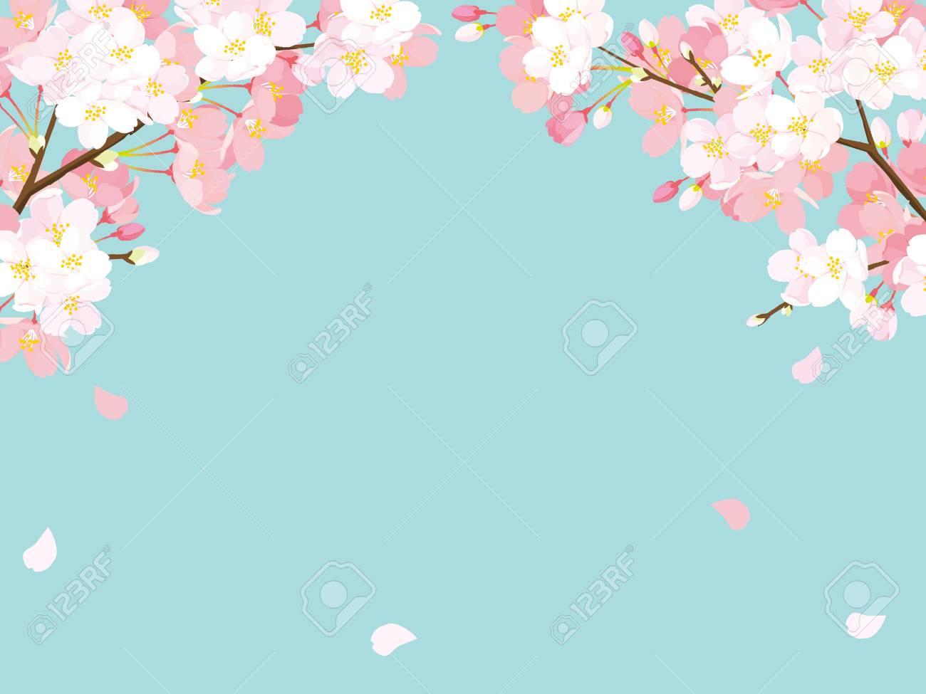 Pink Cherry blossom, Vector Illustration - 93215850