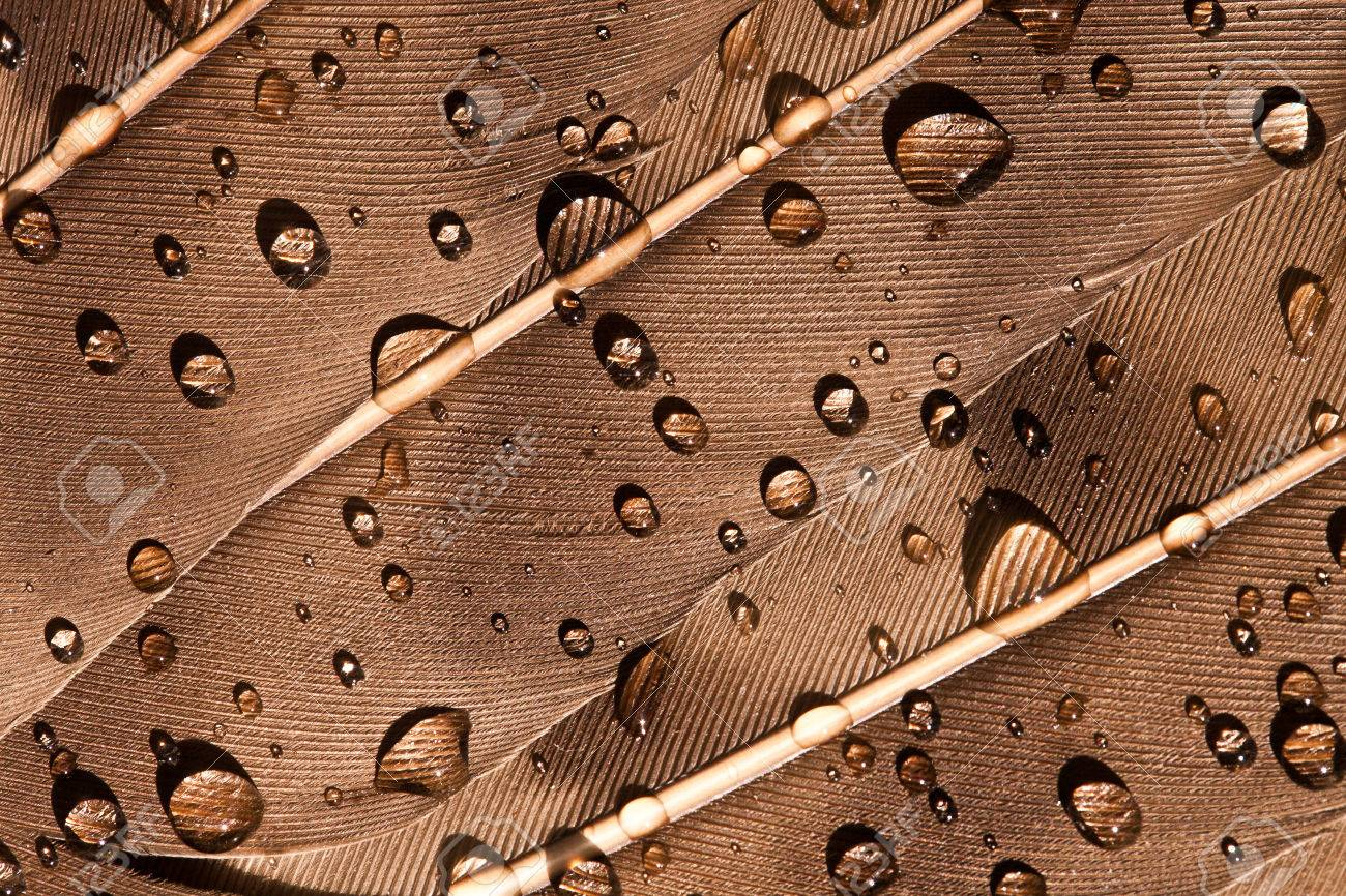Macro photography of a water drops on a bird's feather - 51909575