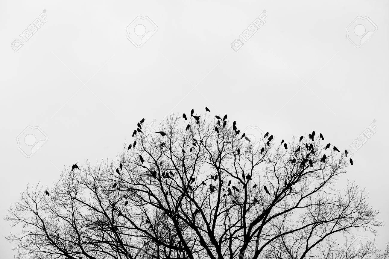 Silhouette of a crow (raven) on a tree - 53664291