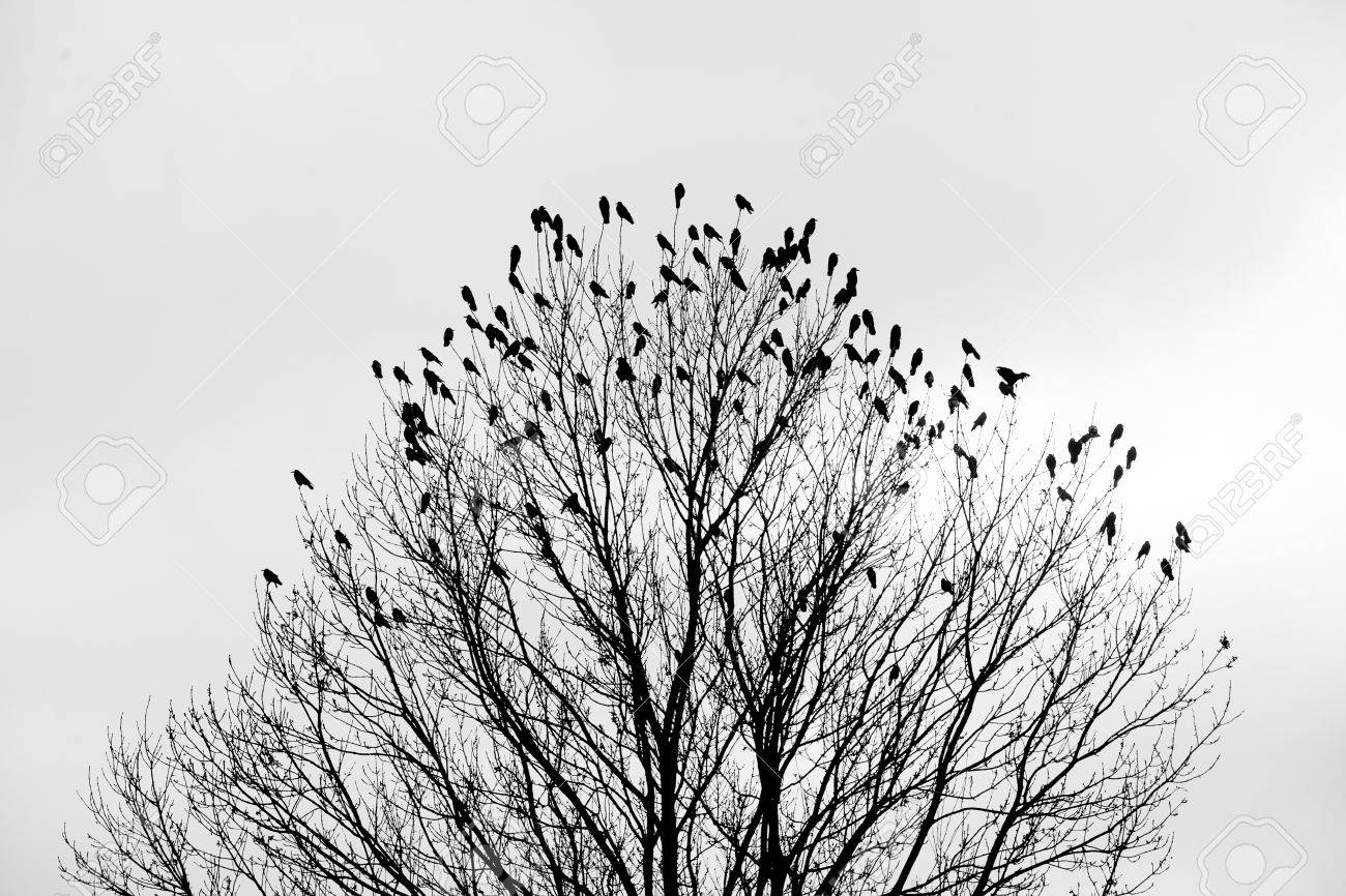 Silhouette of a crow (raven) on a tree - 53664294