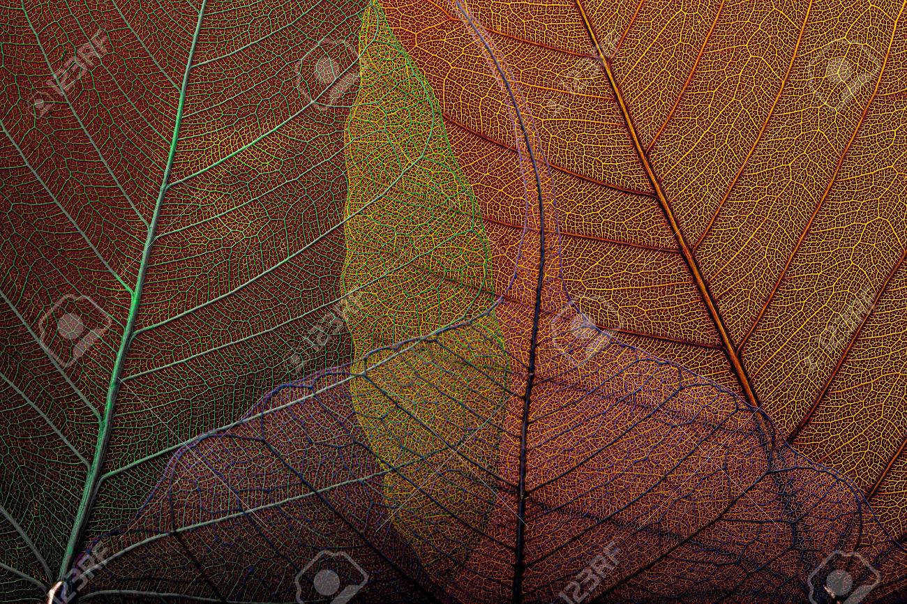 Four skeleton leafs colored background - 53670092