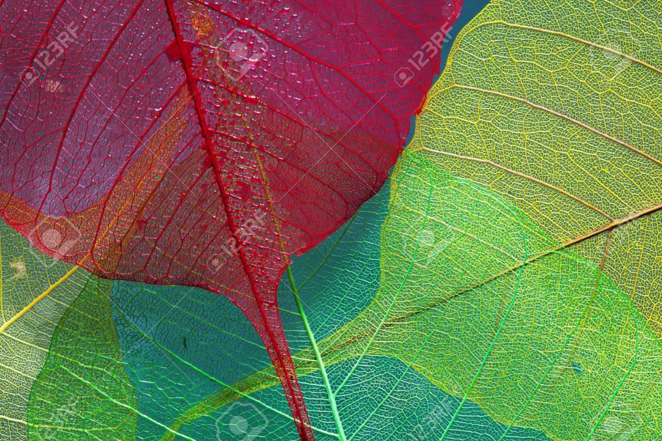 silhouette leaf three skeleton color - 53670096