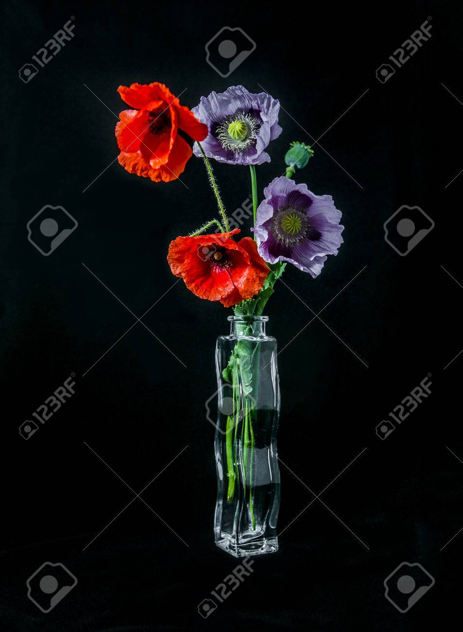 Pink and red poppy flowers in vase on black background - 56196698
