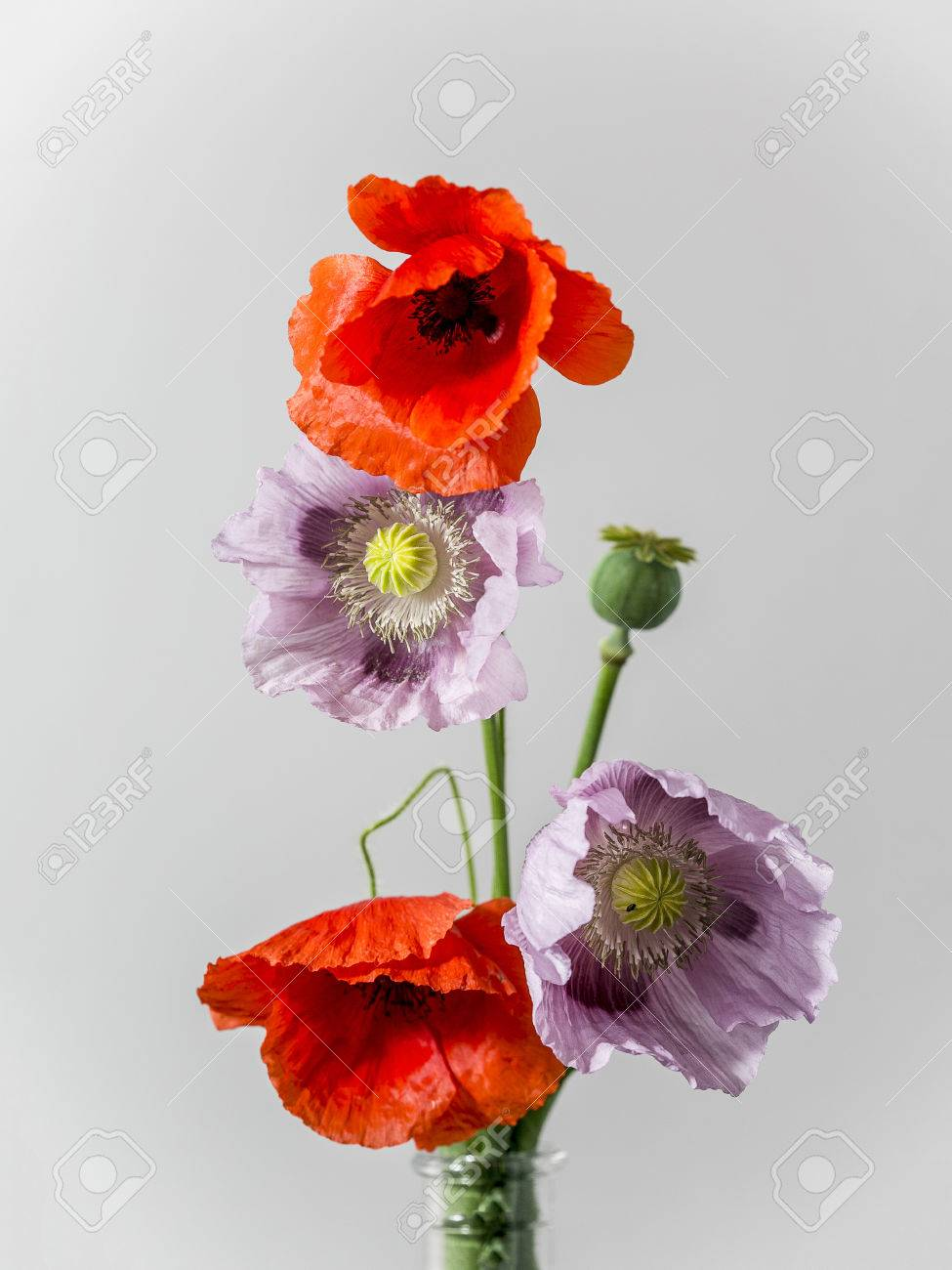 Pink and red poppy flowers in vase on white background - 56196707