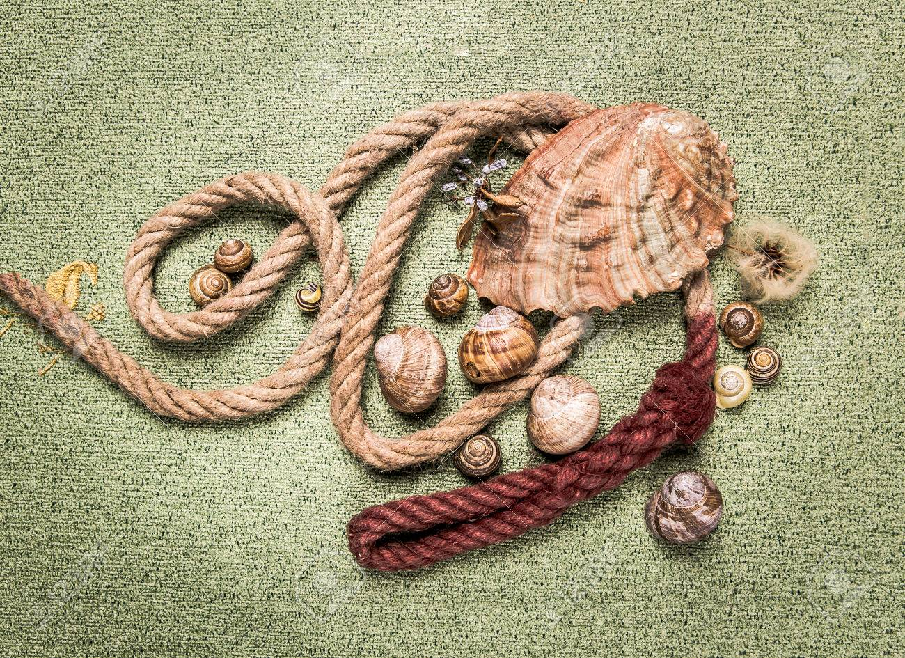 mussels and snail shells on a green carpet - 62058278