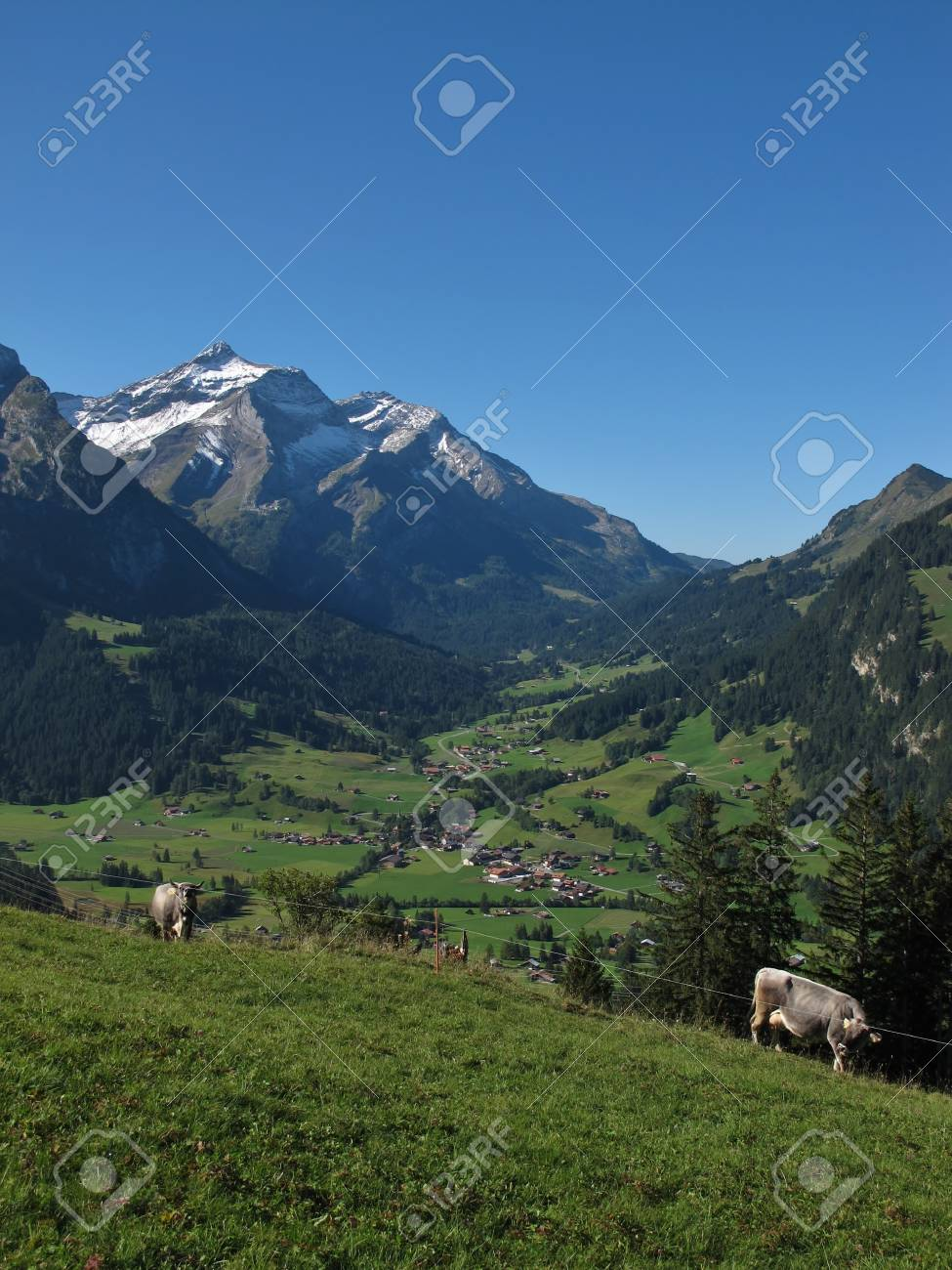 Gsteig Bei Gstaad, Oldenhorn And Cows Stock Photo - 15456096