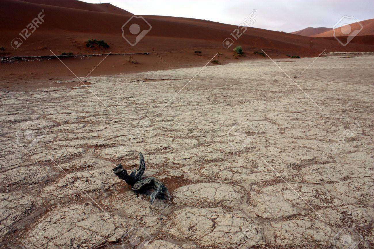 Dead trees in Deadvlei, desert of Namibia Stock Photo - 6410895