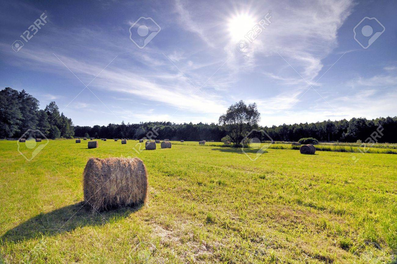 Bales of hay in a sloping field. Stock Photo - 3264976