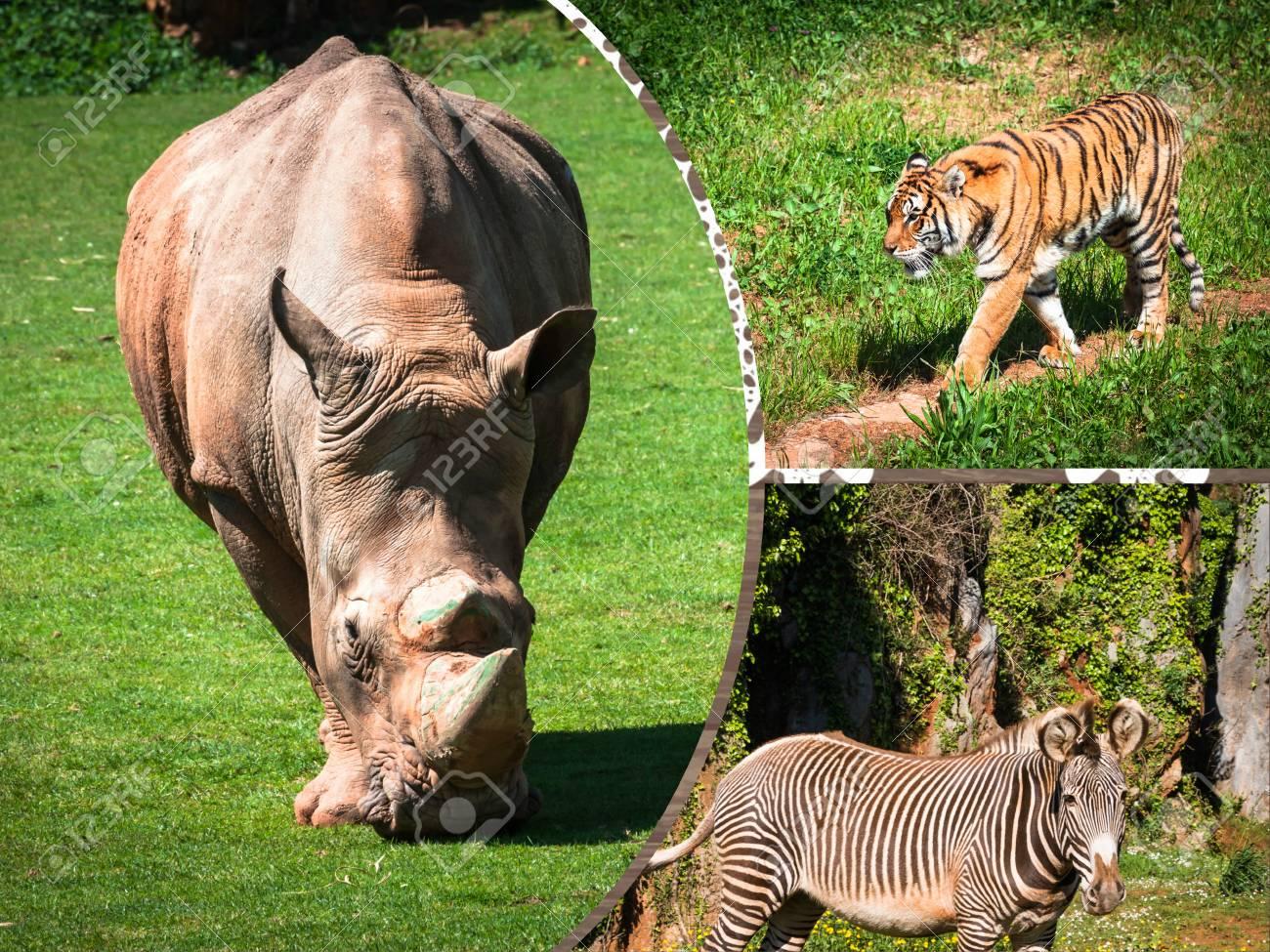 Wild african animals 44