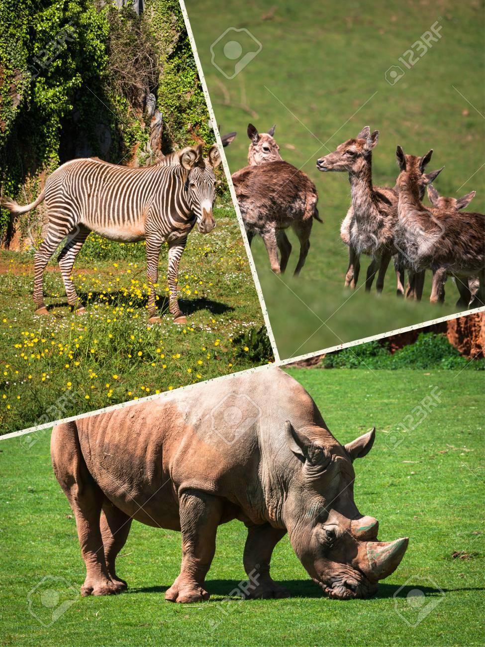 Wild african animals 27