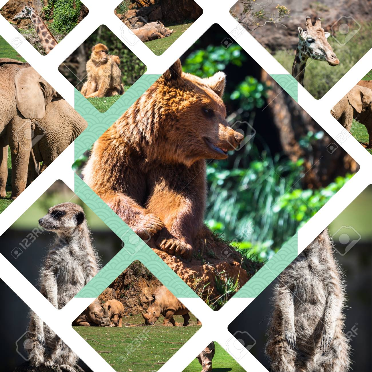 Collage Wild African Animals Stock Photo
