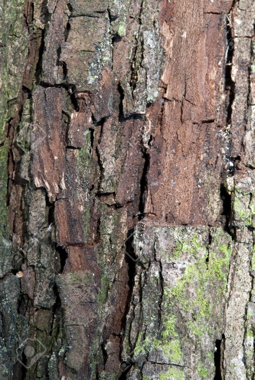 bark tree with moss close up Stock Photo - 13143683