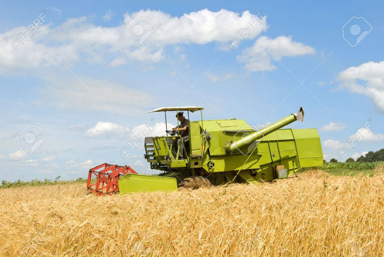 green working harvesting combine in the field of wheat - 14664366